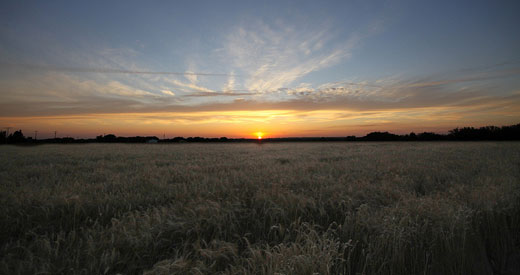 Kansas-Wheat Flickr_Matt-Katzenberger