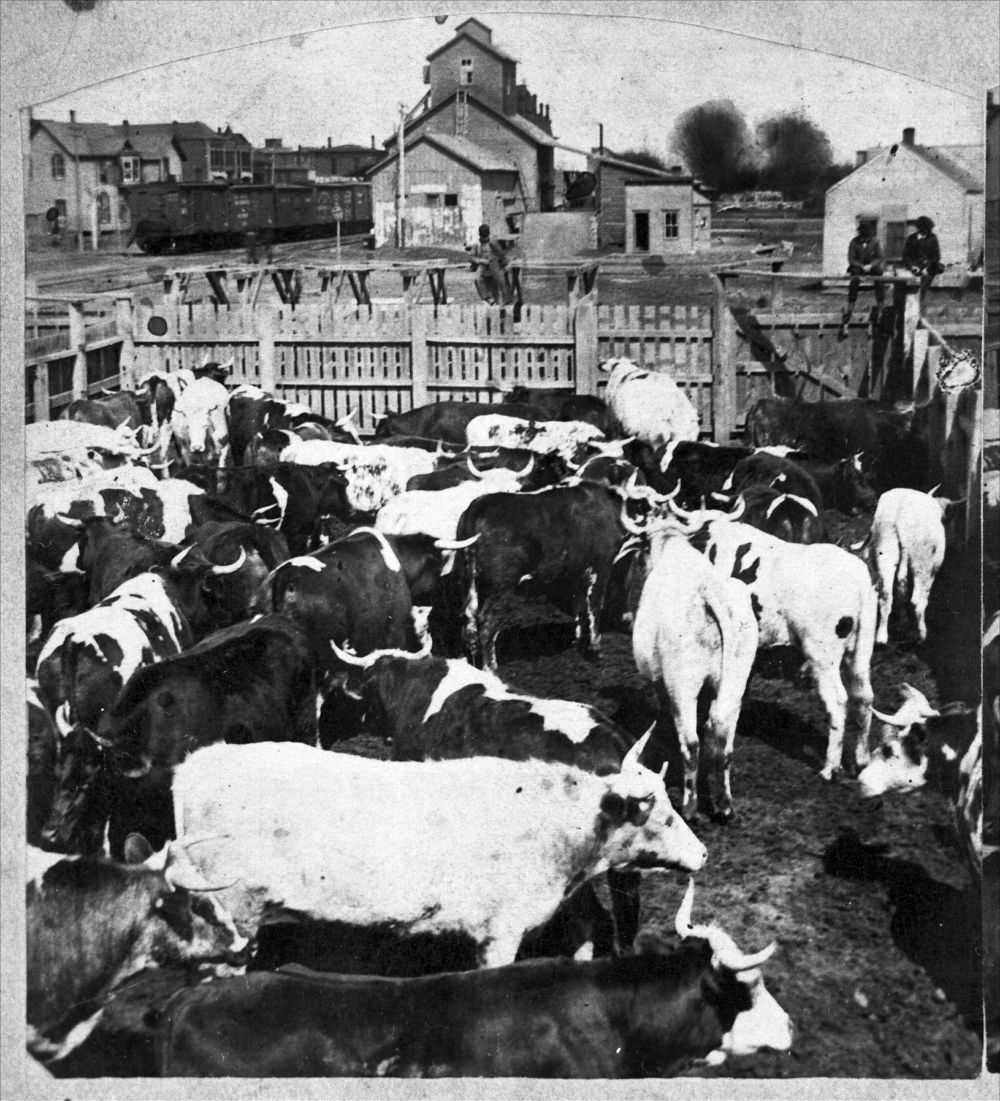 Cattle in the stockyards at Abilene, Kansas. Visible in the photograph are railroad cars and an elevator. Date: 1886  (Photo via Kansas Historical Society/kansasmemory.org)