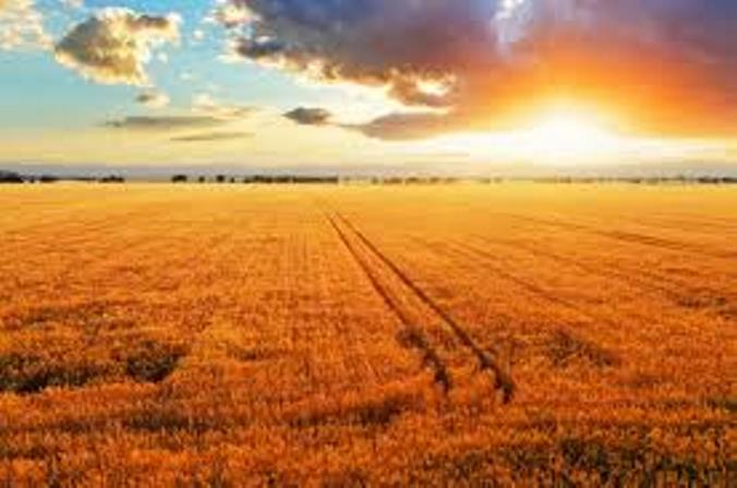 An international group of researchers compiled dozens of studies to see what happens to crop yields as the global climate grows warmer.