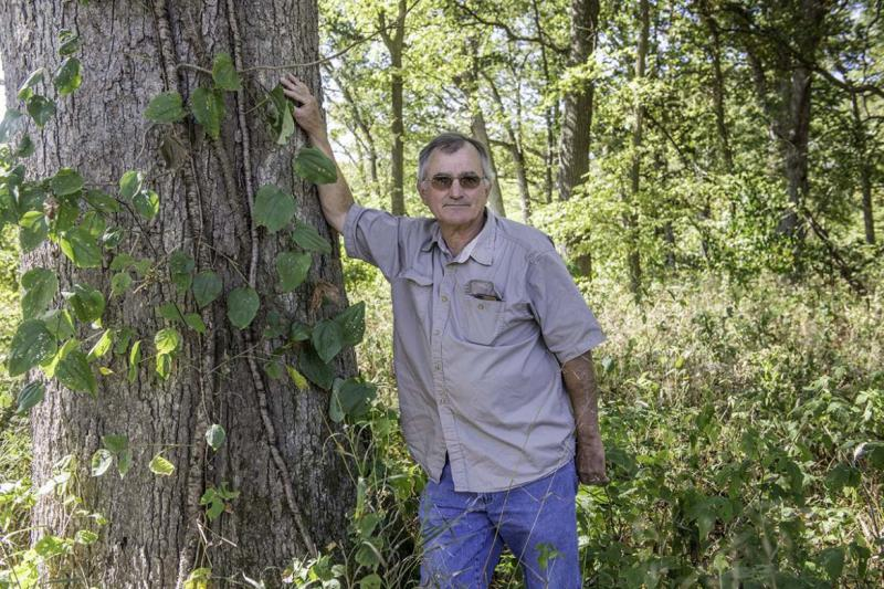 Lou Nelms, a retired biologist, stands next to an oak tree in Atlanta, Illinois, that may have been damaged by herbicide drift.  (Photo by Darrell Hoemann / The Midwest Center for Investigative Reporting)