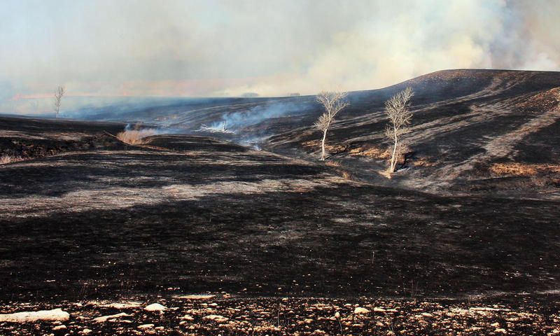 The Kansas Flint Hills, minutes after burning. (Photo by Dan Charles, NPR)