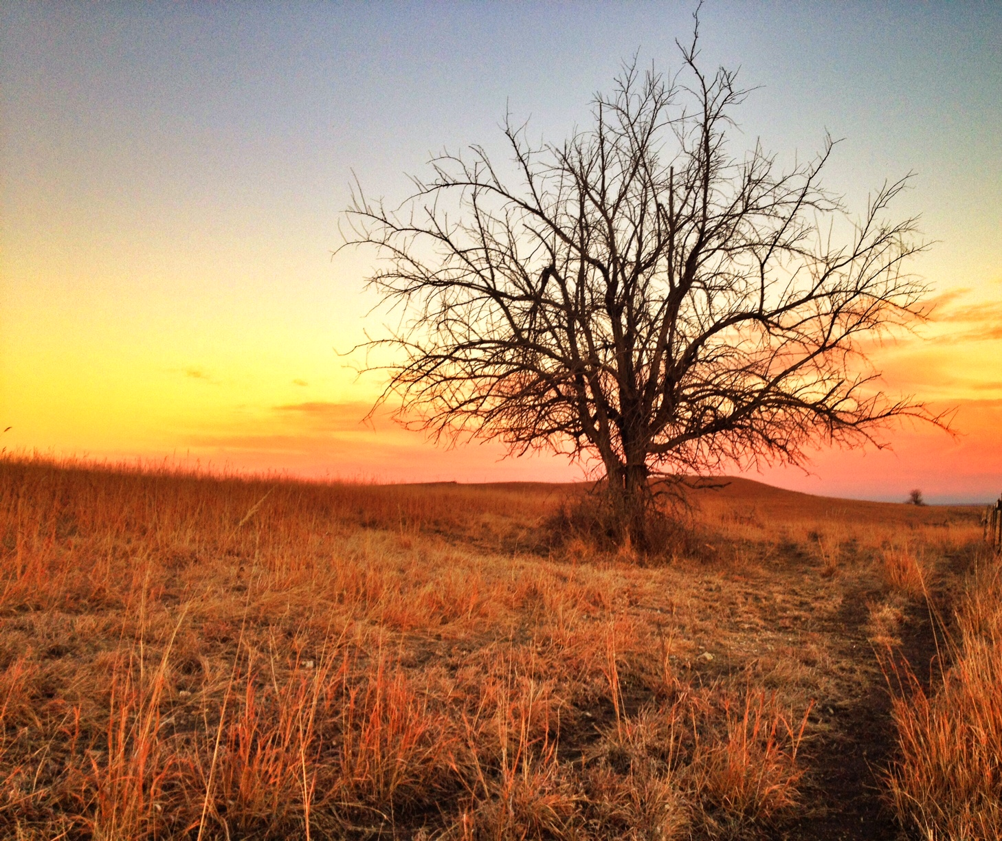 Lonely tree, in the Flint Hills west of Alma, Kansas (Photo by J. Schafer)