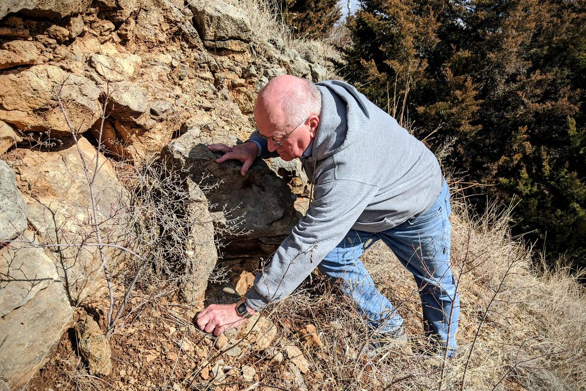 Paleontologist Mike Everhart scans the cliff face for fossils. (photo by Brian Grimmett /Kansas News Service)