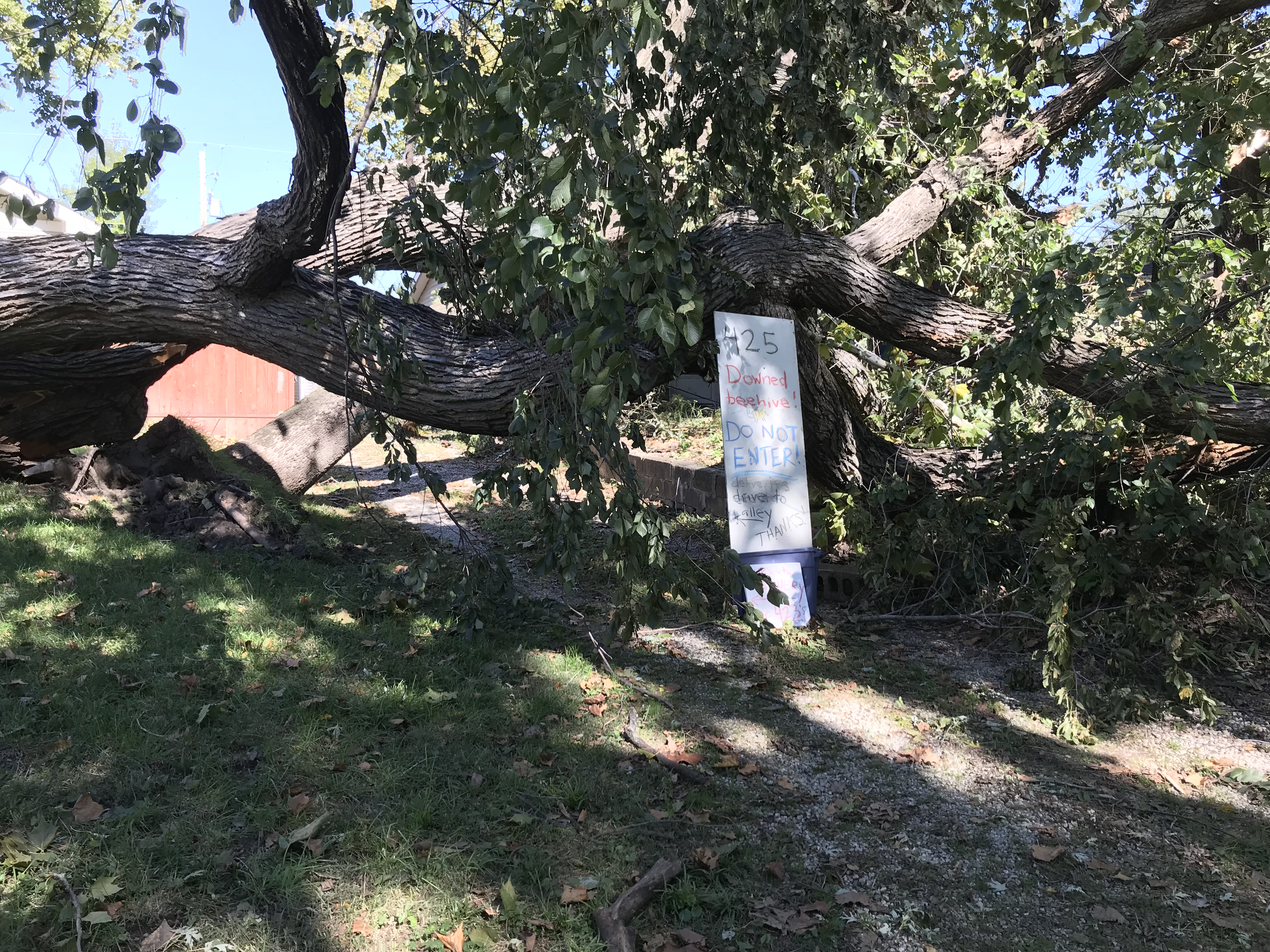 A Do Not Enter sign was installed to keep onlookers away from a beehive in one of the branches of this downed elm tree. (Photo by Danny Mantyla)