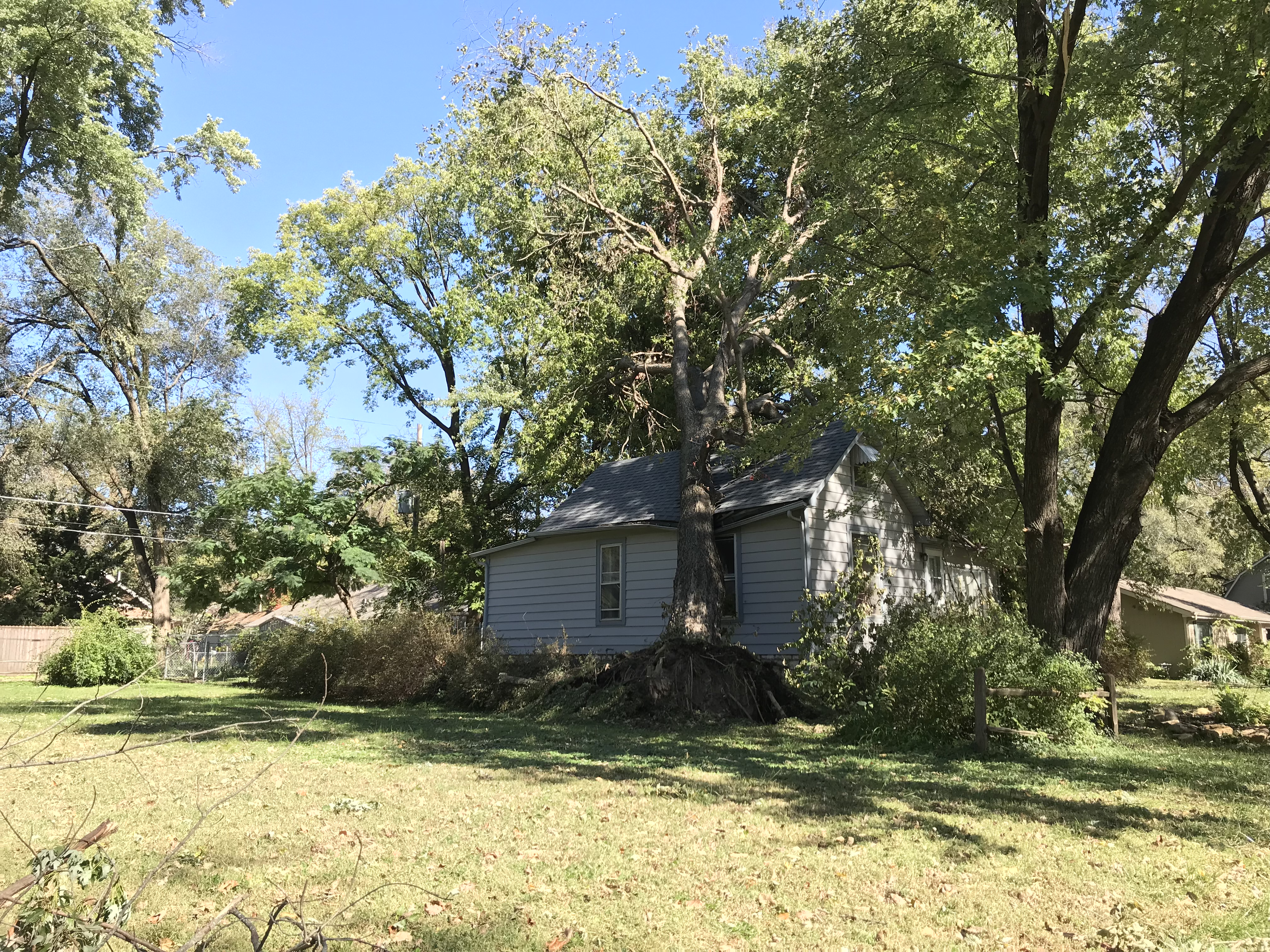 A cottonwood tree landed on this house on Lyon Street. (Photo by Danny Mantyla)