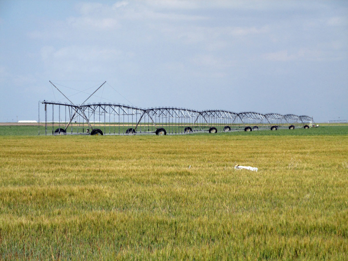 Irrigation near Scott City, Kan. (Photo by David Guth)