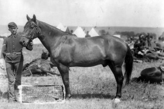 """Comanche"" was the only 7th Cavalry survivor of the Custer Massacre in 1876.  Lots of Indians survived the battle. (Photo Courtesy of Library of Congress)"