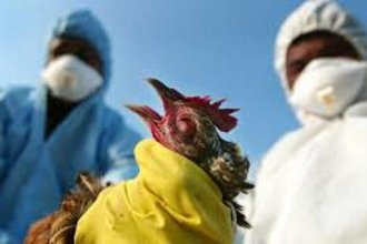 The USDA says the public health risk from avian influenza is low.