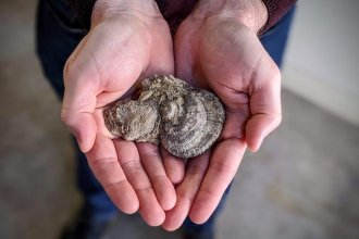 Fossils taken from rocks west of Wichita. (Photo by Stephan Bisaha / Kansas News Service)