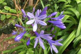 Purple-ish-blue flowers for Mother's Day (Photo by J. Schafer, who doesn't know the name of these flowers))