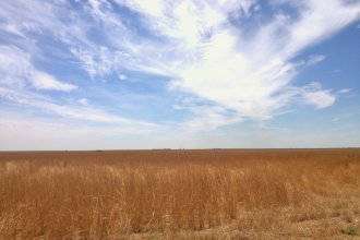 A wheat field in Logan County, Kansas, a part of the Midwest that often suffers from a lack of rainfall. (Photo by J. Schafer)