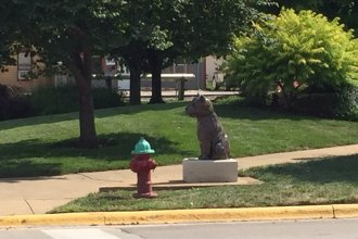 A dog stares at a fire hydrant, near the intersection of 4th and Lincoln, in a small northeast Kansas town. (Photo by J. Schafer)