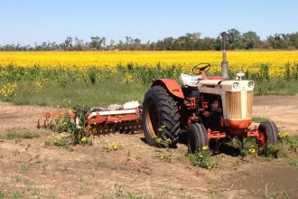 Old tractor parked near a field full of sunflowers, Stafford County, Kansas (Photo by J. Schafer)