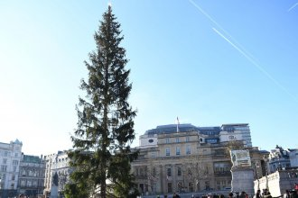 A Norwegian spruce stands at the center of London's Trafalgar Square on Wednesday. Many are calling this year's tree — a gift from Oslo — meager and sparse.