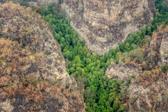 Fire swept through Australia's Wollemi National Park, but firefighters were able to save rare groves of prehistoric Wollemi pines.