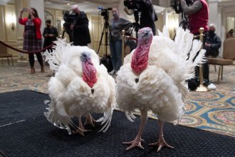 Corn and Cob, a pair of turkeys that President Trump will pardon, attend a press conference announcing their names Monday at the Willard Intercontinental Hotel in Washington, D.C.