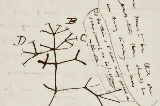 "Included in the missing notebooks is Charles Darwin's famous ""tree of life"" sketch, according to Cambridge University Library."