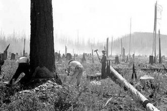 CCC sawing down dead trees in a burned area near Belton, Mont.