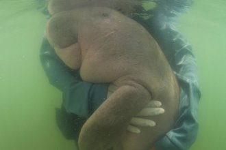 An official of the Department of Marine and Coastal Resources hugs Marium, a lost baby dugong. The 8-month-old mammal, who captured hearts online, died after biologists believe she ate plastic waste.