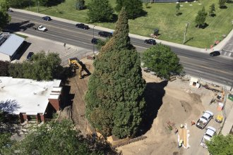 An aerial view of the sequoia in Boise, Idaho, as workers prepared to transport it about two blocks. Heavy machinery had to be used to prune its roots and build a structure so they could move the roughly 100-foot tree, which was planted back in 1912.