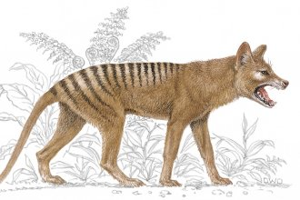 An illustration of a Thylacine  (Photo by: Brown Bear/Windmill Books/UIG via Getty Images)