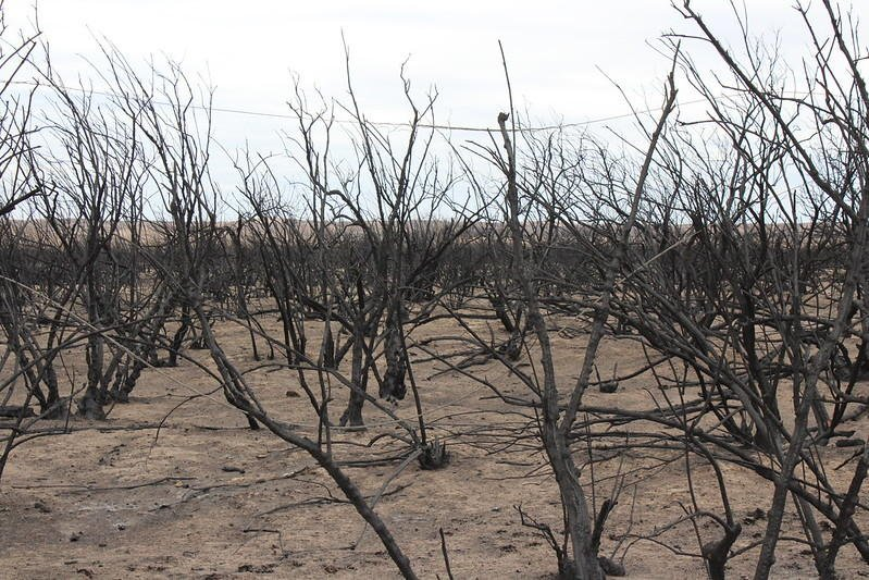 Damage left by the Starbuck fire that burned in south central Kansas in 2017. (Photo by Elly Sneath, Kansas State University Research and Extension)