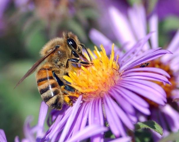 A study by an international biodiversity research group found that nearly 40 percent of the world's insect pollinators are at risk of extinction.