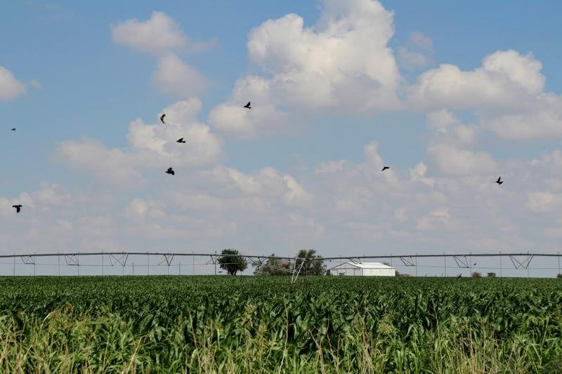 The Kansas1st Congressional District comprises 63 counties where agriculture is central to the economy. (Photo by Corrine Boyer, Kansas News Service)