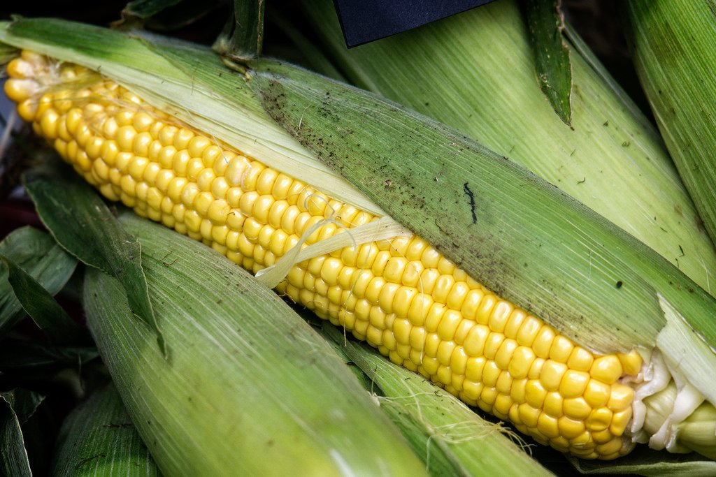 Ear of sweet corn