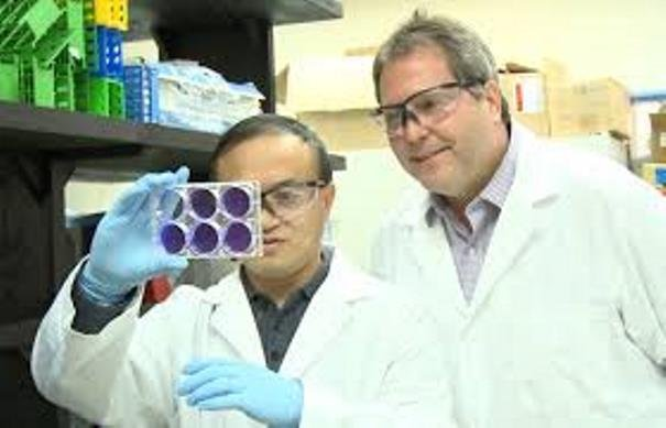 Kansas State University researchers Dr. Jurgen Richt and Dr. Wenjun Ma.