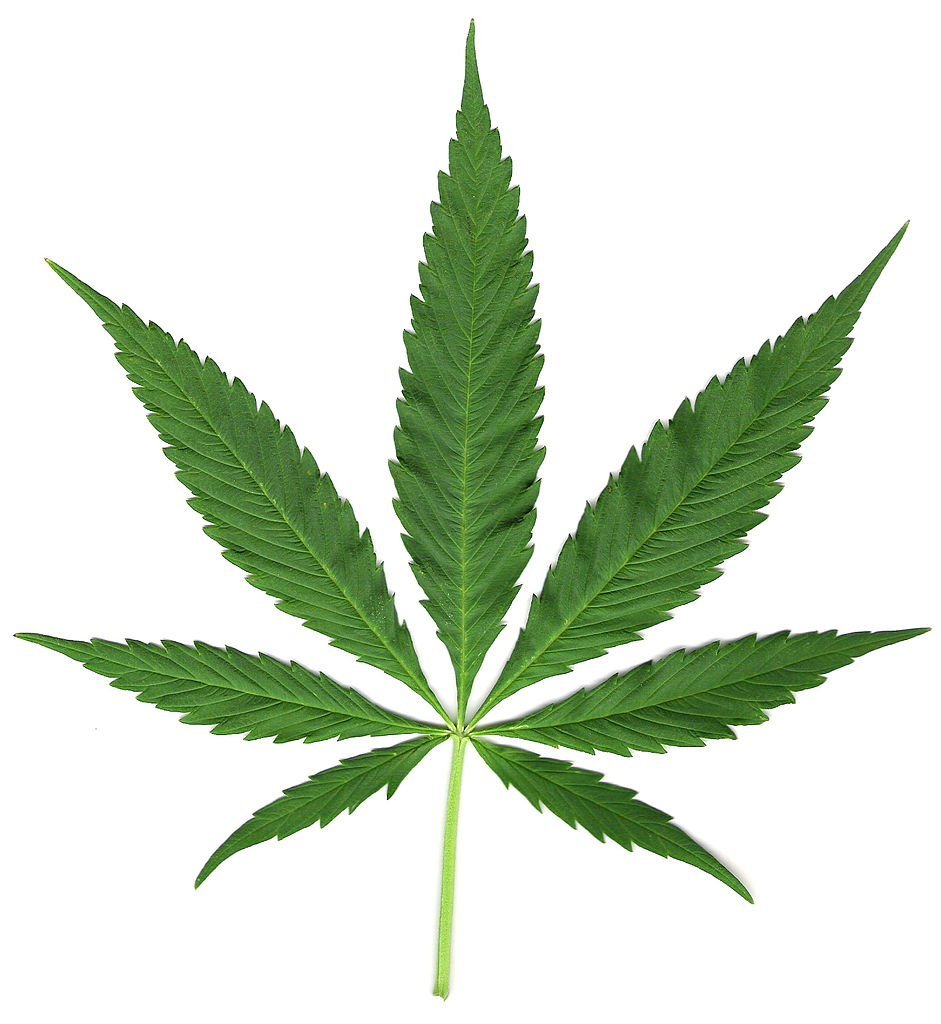 Image of a marijuana leaf