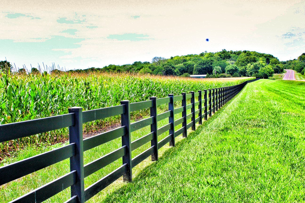 Rows of corn grow near a fence line in Douglas County, Kansas.  (Photo by J. Schafer)